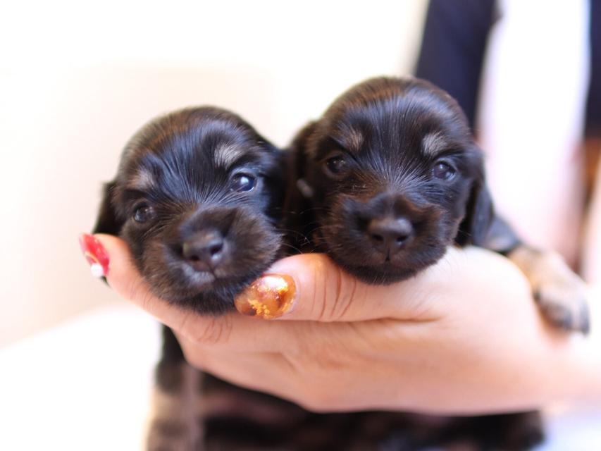 ペコ & ナイトの子犬 ブラックイエロー 女の子達 お写真初登場