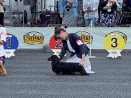 dachshund15