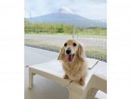 今日の富士山とエリカの笑顔