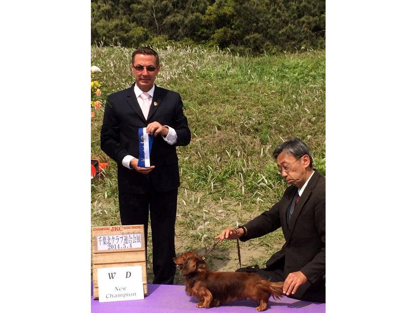 【ドッグショー】千葉北クラブ連合会展展 ジムダンディ ウイナーズ チャンピオン完成しました