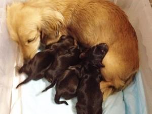 カニンヘンのチェルシーが4/21出産しました 男の子1、女の子3