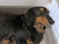 ララcs 4月22日 子犬の出産