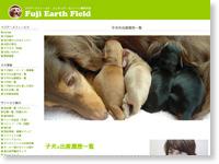 ダックスフンド子犬の出産履歴一覧